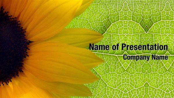 Sunflower Background PowerPoint Templates - Sunflower