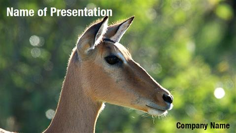 Antelope Impala