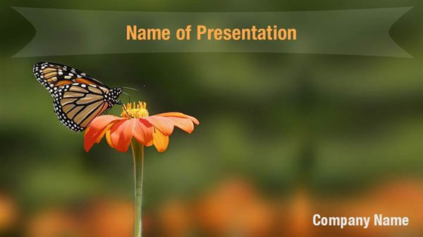 Butterfly Powerpoint Background Templates