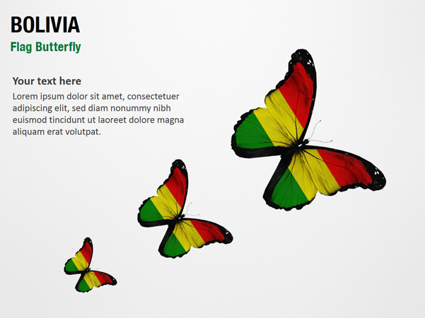 Bolivia Flag Butterfly