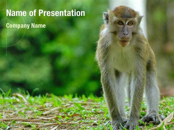 Baby Ape