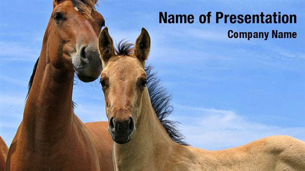 Beautiful Wild Horses