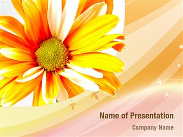 Orange Daisy Theme