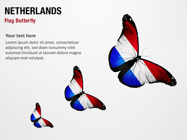 Netherlands Flag Butterfly