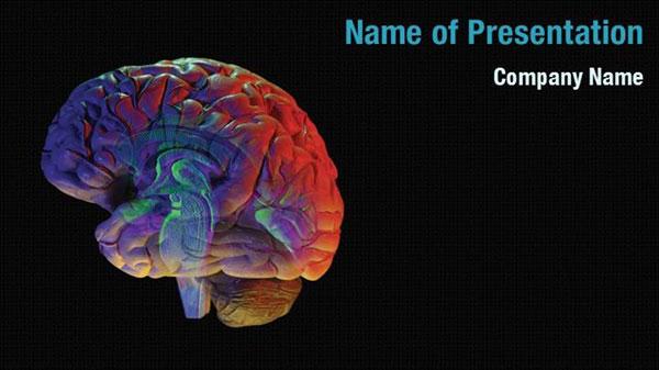 Brain Anatomy Powerpoint Templates Brain Anatomy
