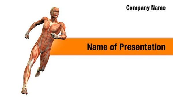 Human Muscle Anatomy Powerpoint Templates Human Muscle
