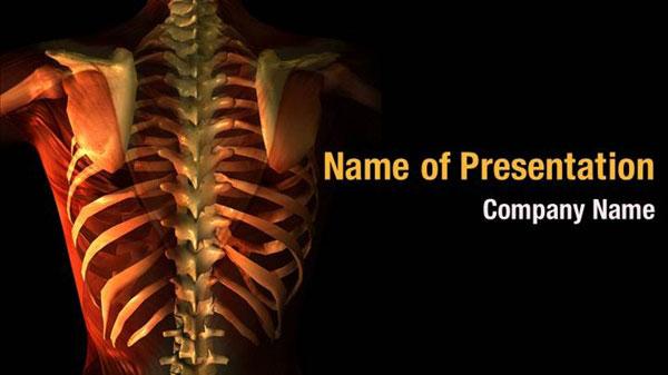 Spine Anatomy Powerpoint Templates Spine Anatomy
