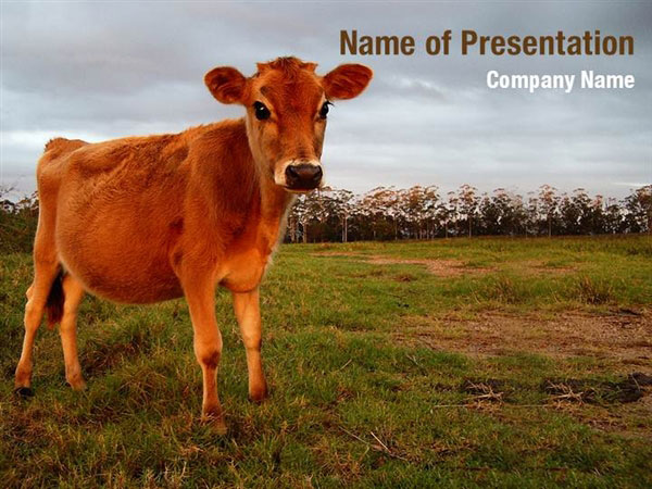 Cow PowerPoint Template Backgrounds