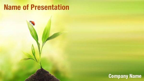 Ladybug On Plant Powerpoint Templates Ladybug On Plant