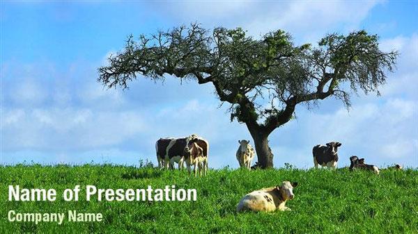 Cattle Grazing Field