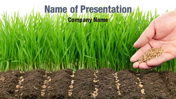 Wheat Seeds Powerpoint Templates Wheat Seeds Powerpoint
