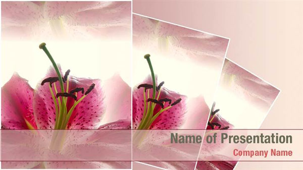 Powerpoint templates gt abstract textures gt pink flower